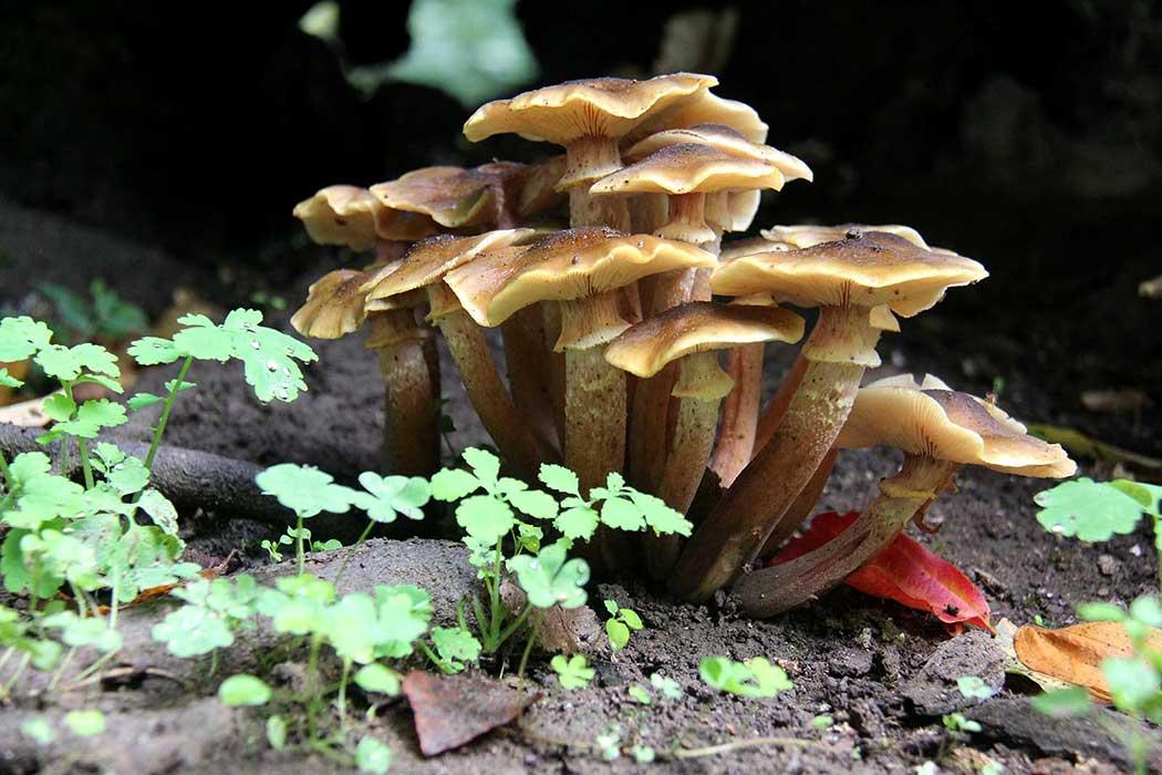 قارچ در جنگل آبشار هفت طبقه شیرآباد  Mushroom in Jungle